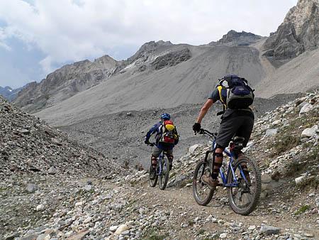 Steinböcke im Val Zebru